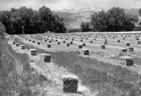 field of square hay bales